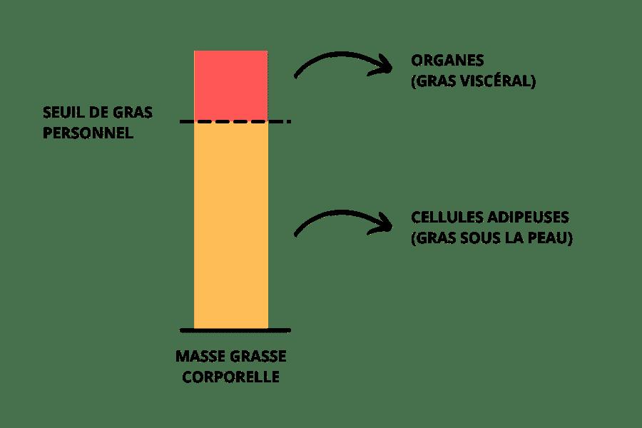 stockage du gras selon le seuil personnel
